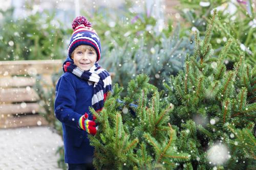 Real christmas trees northampton