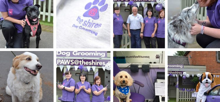 Paws at the Shires – Open Day