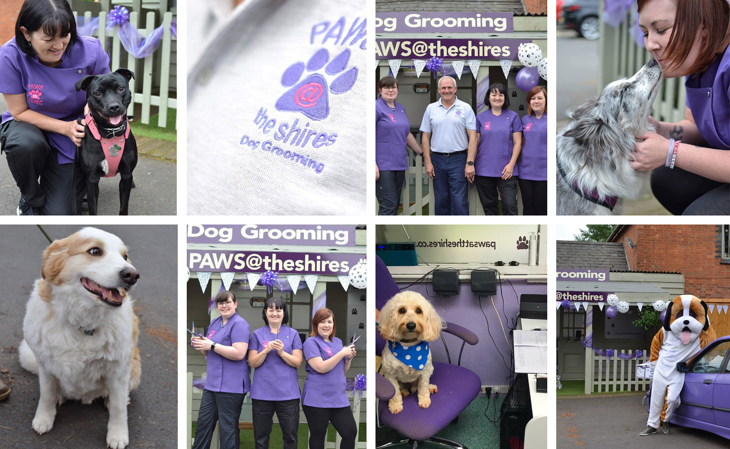 dog grooming daventry
