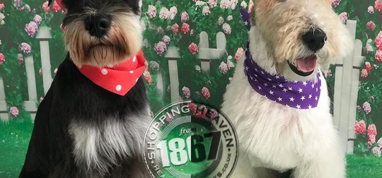Trimmed Terriers at Paws at the Shires