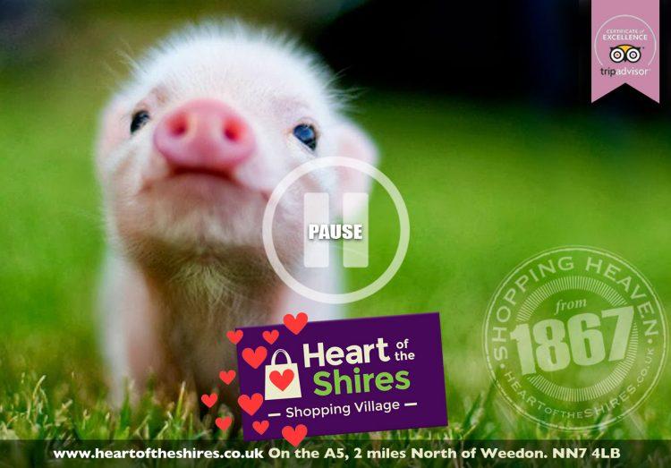No Porkies…
